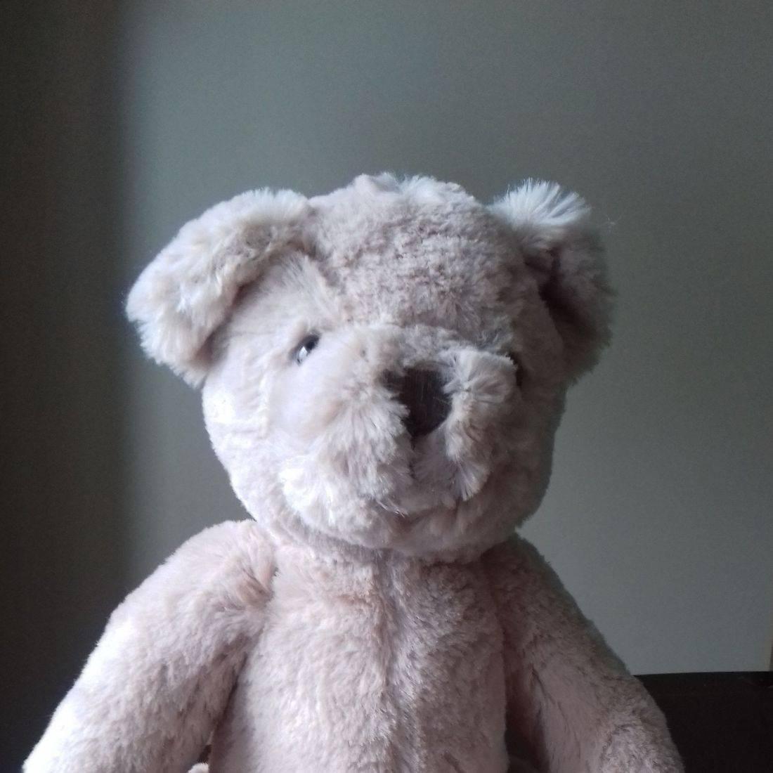 Cuddly light brown teddy