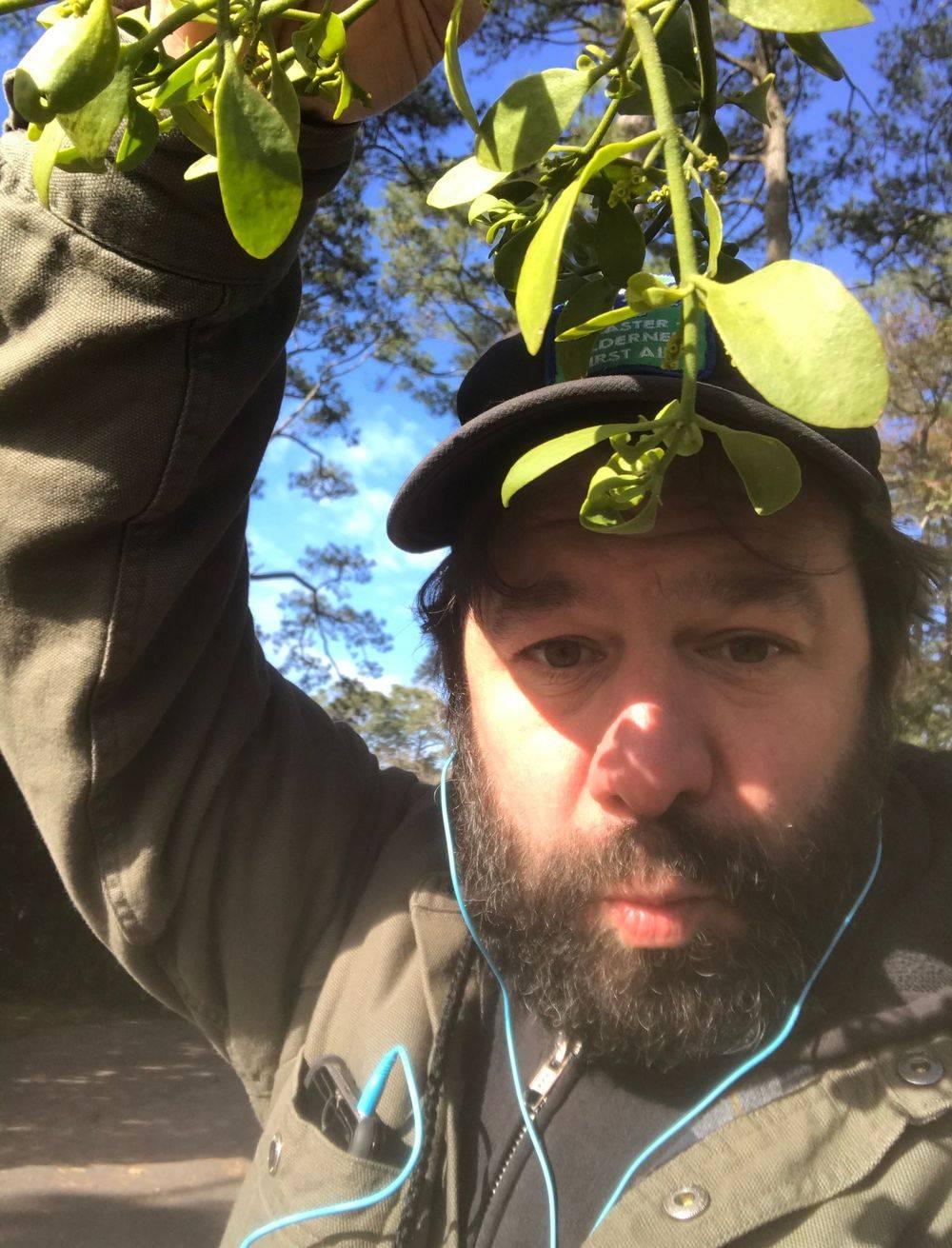 Mistletoe, About Mistletoe, Enchanted Nature Tours