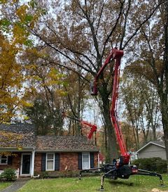 Arundel Tree Service hazardous tree removal and pruning