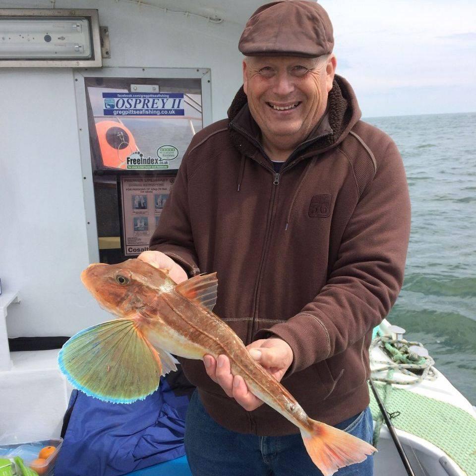 Fisherman holding a 3lb Tub Gurnard