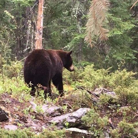 black bear hunts, black bear, hunting, Manitoba Canada