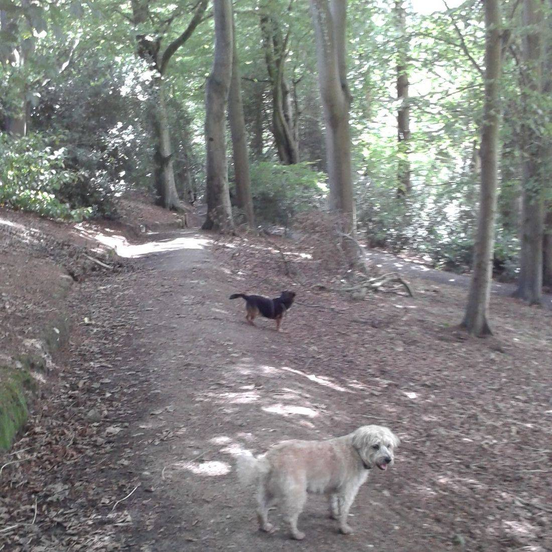 Dogs listening in the woods