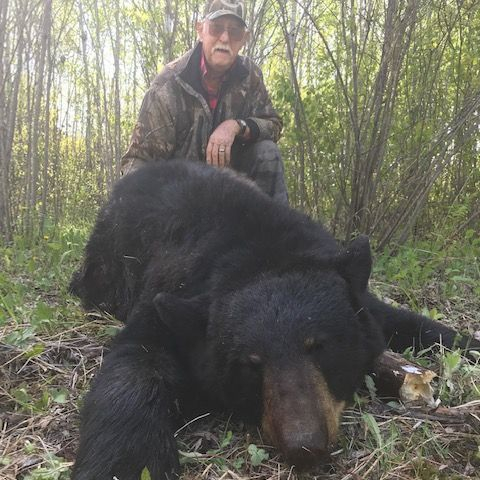 Hunt, bear, bear hunting, bow hunting, bow hunter, Manitoba, trophy black bear, bear outfitters, Hastings Bros.