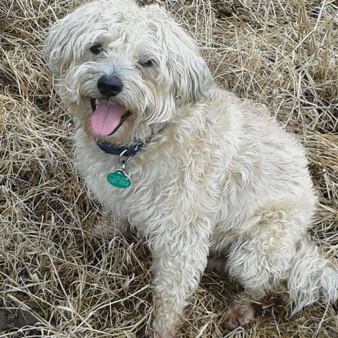 Cute dog smiling at the camera
