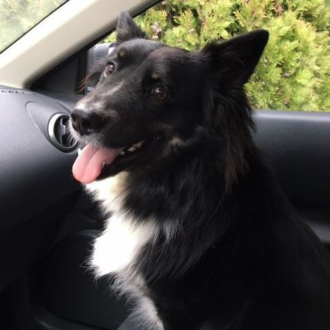 uber for your pets