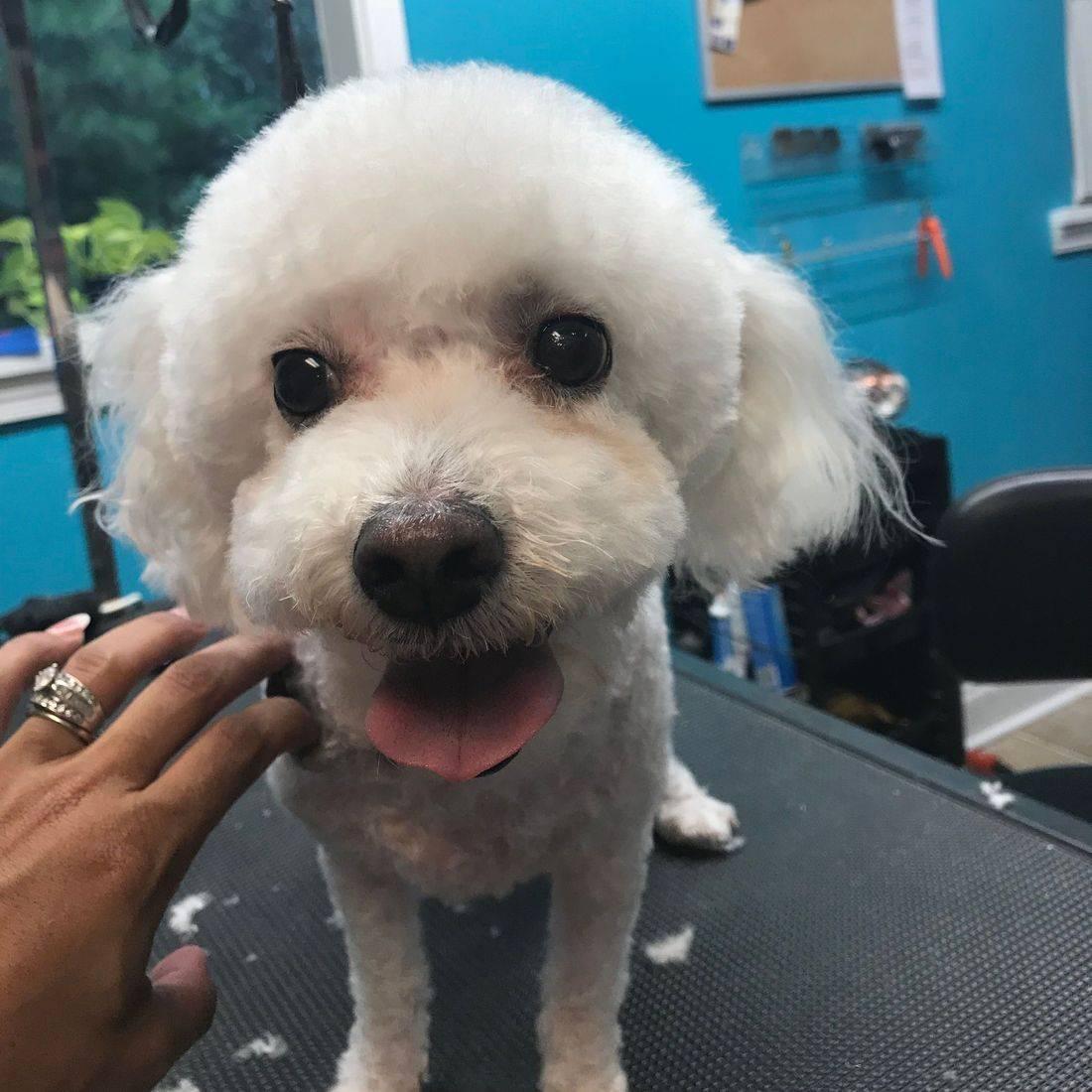 Pet Parlor Client Asia Fusion Face Start
