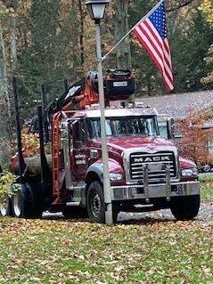 Tree removal and log hauling service Pasadena Maryland