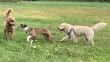 dog walker waltham