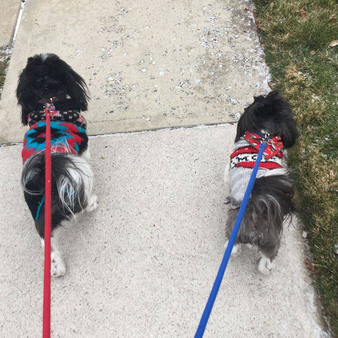 Photo of two dogs walking on leashes