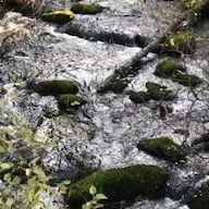 Moss, rocks, river, creek, green, forest, tour, nature, natural