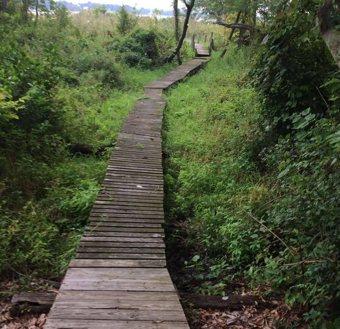 Cedar Haven's Scenic Trail