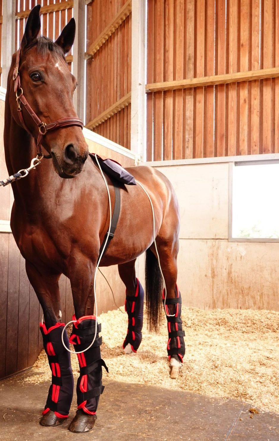 horse massage rug hire FMBS