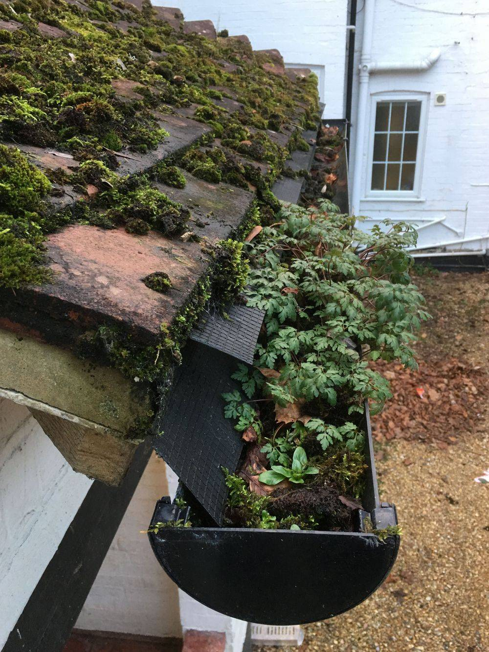 Gutter cleaning plants blockages