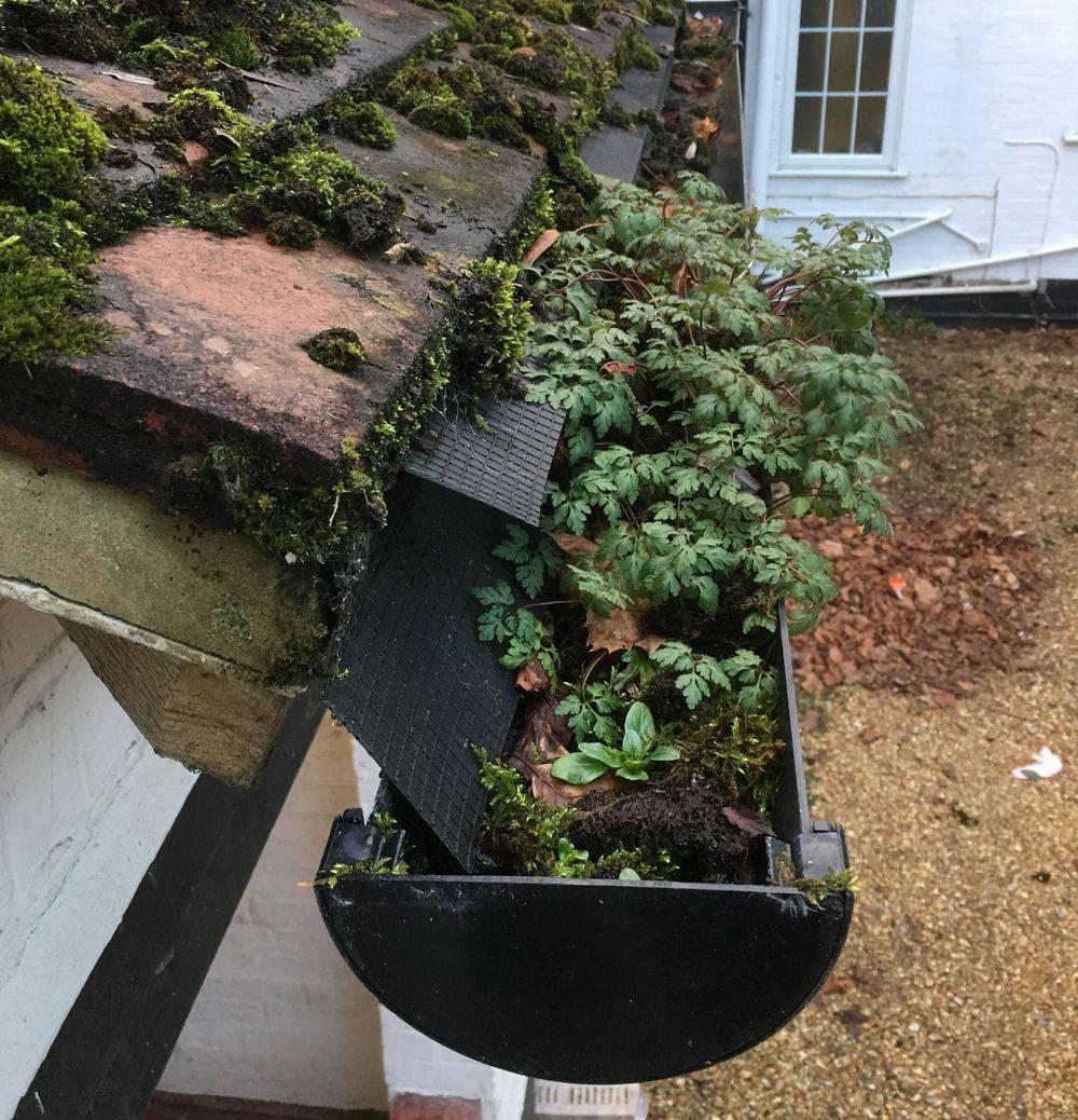 Gutter cleaning blockage plants