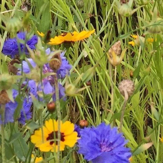 Copy-writing image - fresh wild flowers
