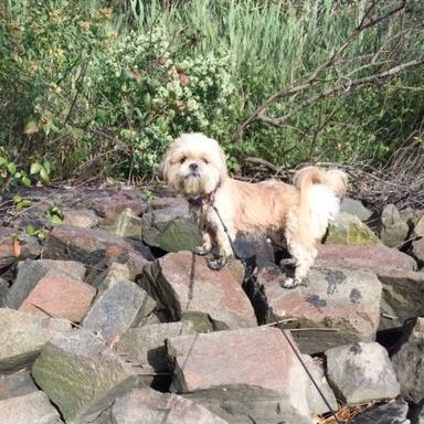 Photo of a small dog exploring on some rocks